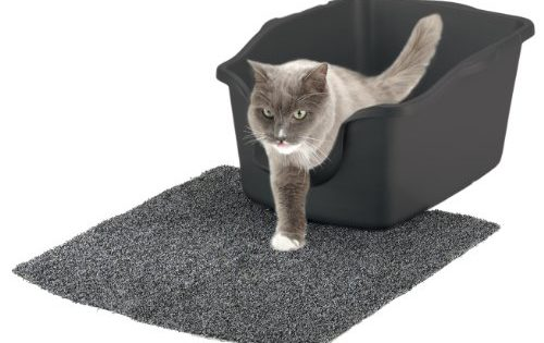 Best High Sided Litter Boxes In 2019 Top 5 Reviewed