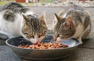 Best Cat Food For Older Cats in 2019 | Review of Top 5 Products