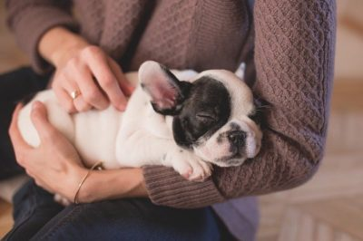 Why Do Dogs like to Be Pet?