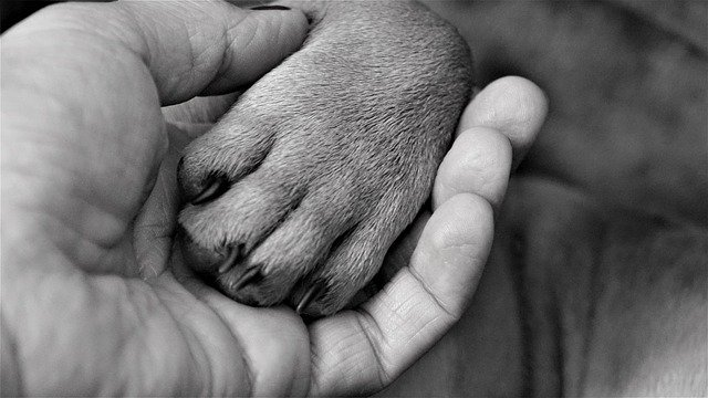 WHY DO DOGS PUT THEIR PAW ON YOU?