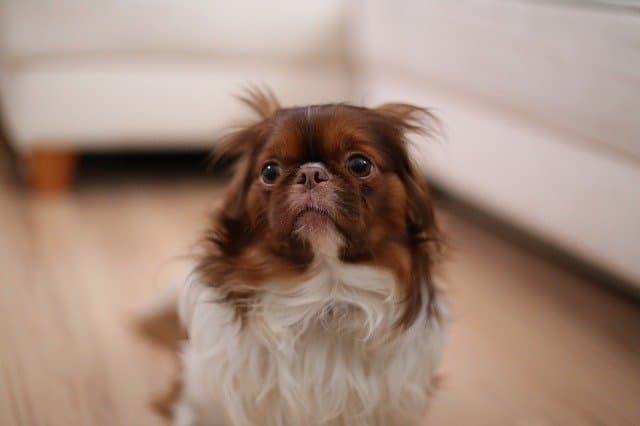 Calm an Anxious Dog