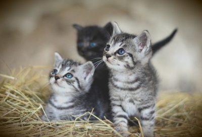 Best Cat Litter for Kittens