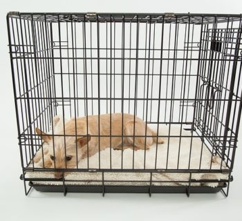 How Long Does It Take to Crate Train a Puppy?