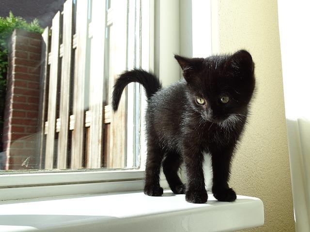 Determine a Kitten's age