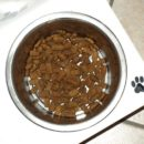 Best Limited Ingredient Dog Food