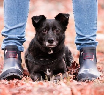 Why Do Dogs Lay On Your Feet?