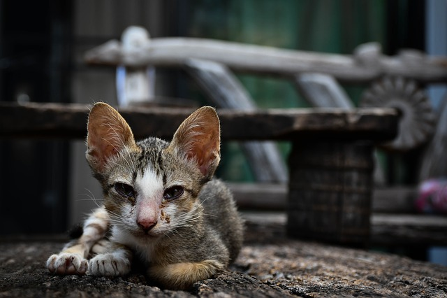 What to Do With a Stray Kitten