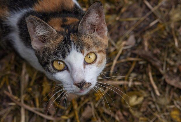 When Do Kittens Start Using the Litter Box