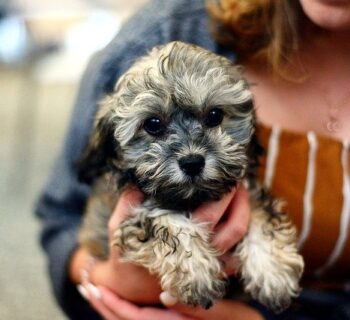 Why Do Puppies Get Hiccups?