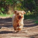 Best treats for yorkie puppies