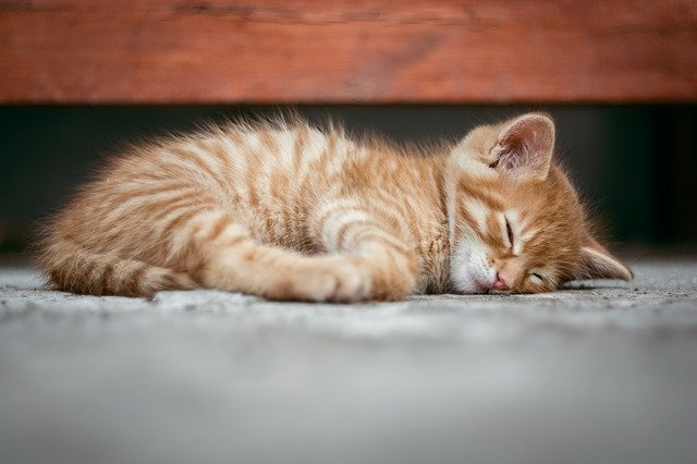 How to Get a Kitten to Sleep at Night