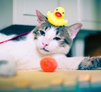 When Can You Bathe a Kitten?