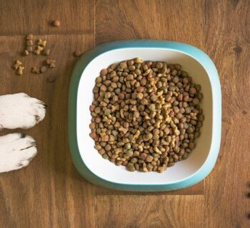 What Are The Benefits Of Using Organic Dehydrated Dog Food?