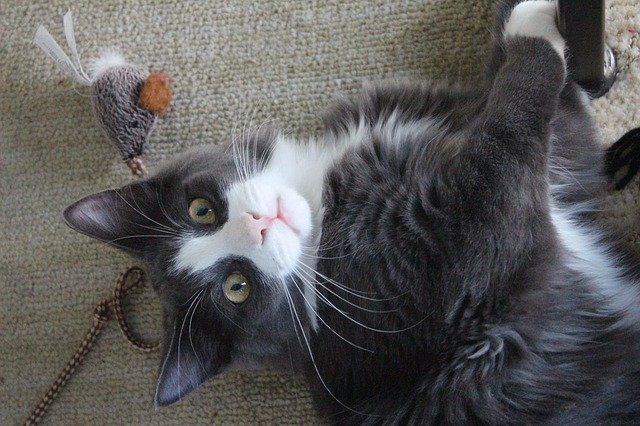 Best Cat Toys for Indoor Cats in 2021 | Review of the Top 5 Products