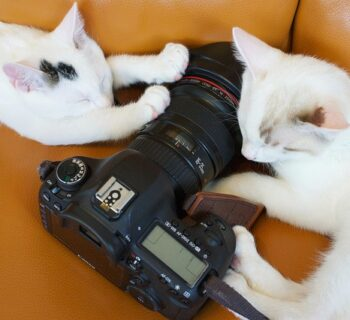 Best Pet Camera for Cats