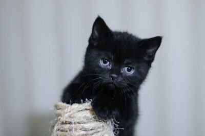 Why Do Cats Like String?